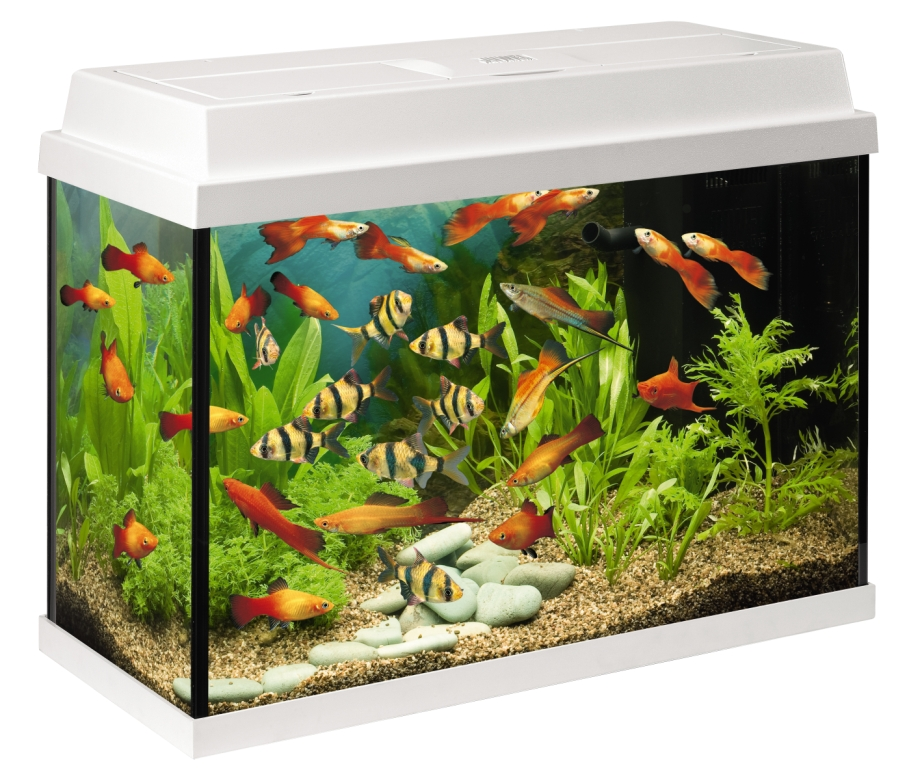 Aquariums zonder meubel juwel rekord 700 wit for Aquarium prix